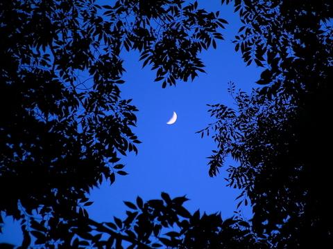 三日月と木々.jpg